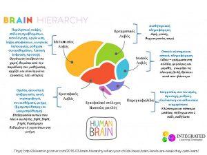 εγκεφαλικη ιεραρχια